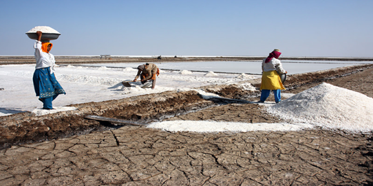 Agariyas work on the salt pans of the Little Rann of Kutch
